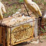 ラック村養蜂