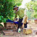 ラック村の養蜂家